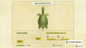 Animal_Crossing_Soft_shell_Turtle_page