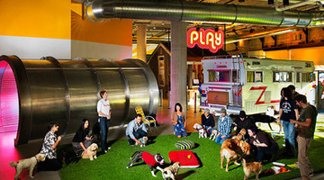 Zynga staff vent over stock price collapse