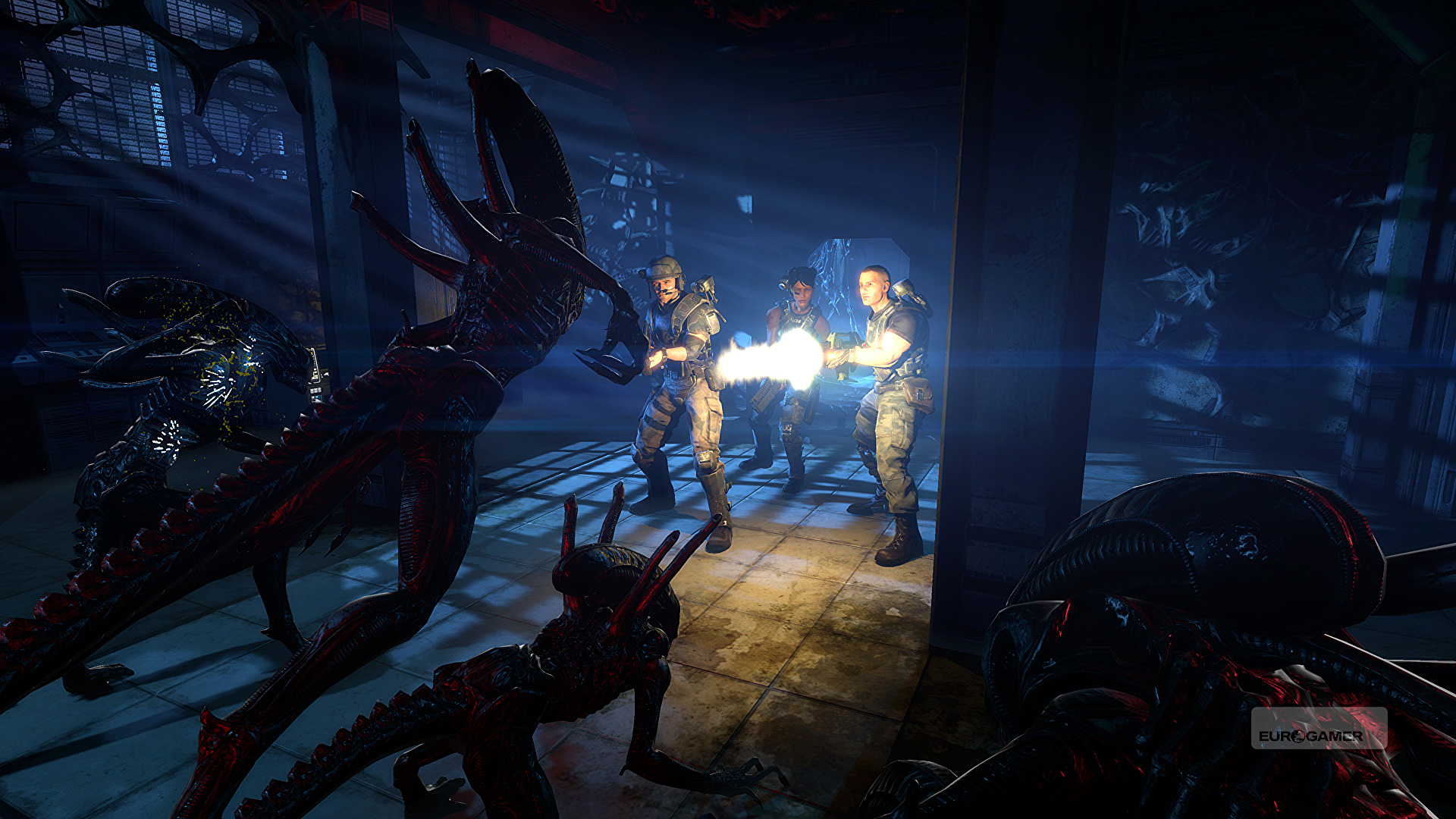 Download Torrent Aliens Colonial Marines Pc Patch