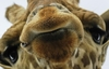 Animal PICS! Guess The Animals Answers, Solutions & Cheats: Animals Level 31-40