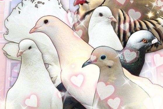 pigeon dating sim english