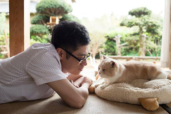'Neko Atsume' Movie Will Bring Game To Life In 2017