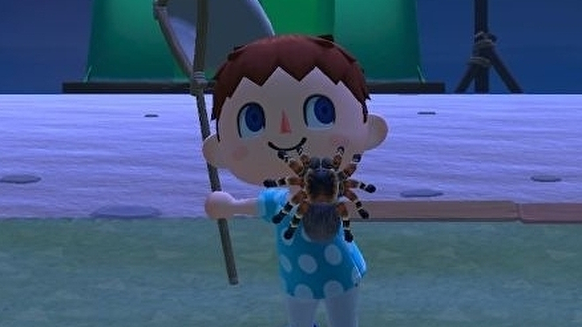 Animal Crossing Tarantulas How To Catch Spawn And Get Tarantula