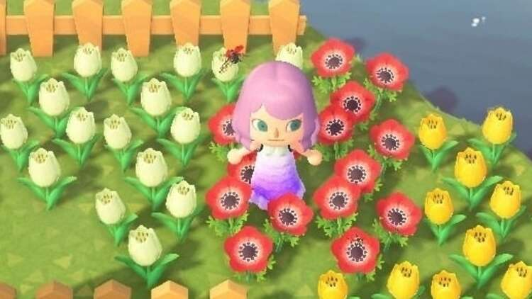 Animal Crossing Flowers Hybrids Crossbreeding And Colour