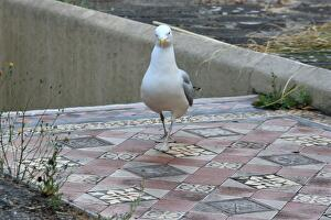 seagull_approach_zoom