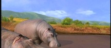 Afrika - Hippo watching